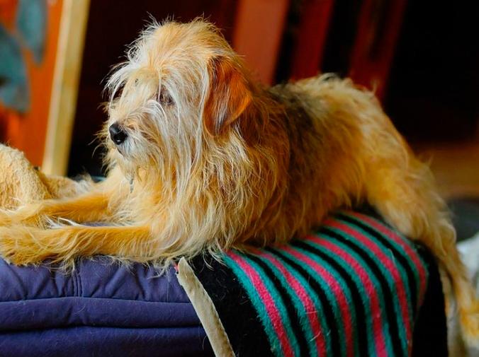 Los problemas con perros en las comunidades